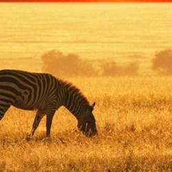 afrikas djurliv 21 underbara bilder