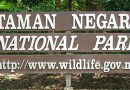 Taman Negara – Tropisk Regnskog – Malaysia