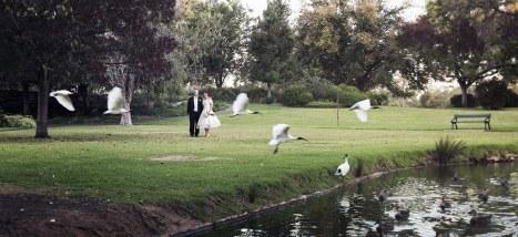 Veale Gardens Birds