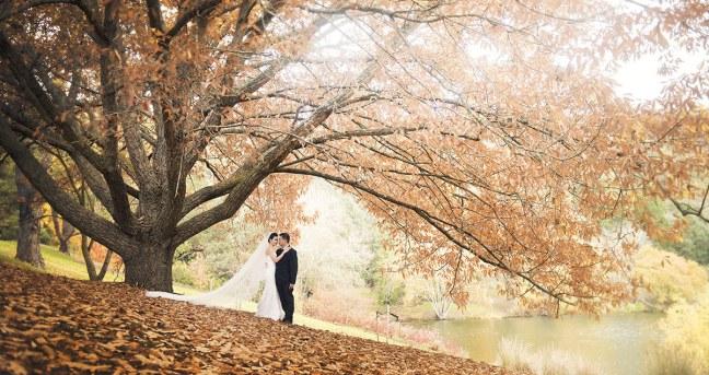 Bride and Groom at Mt Lofty Botanic Park