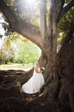 Adelaide Botanic Park tree