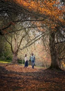 Mt Lofty Botanic Gardens Autumn colours