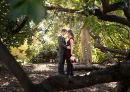Bride and groom together in the tree at St Helens Park