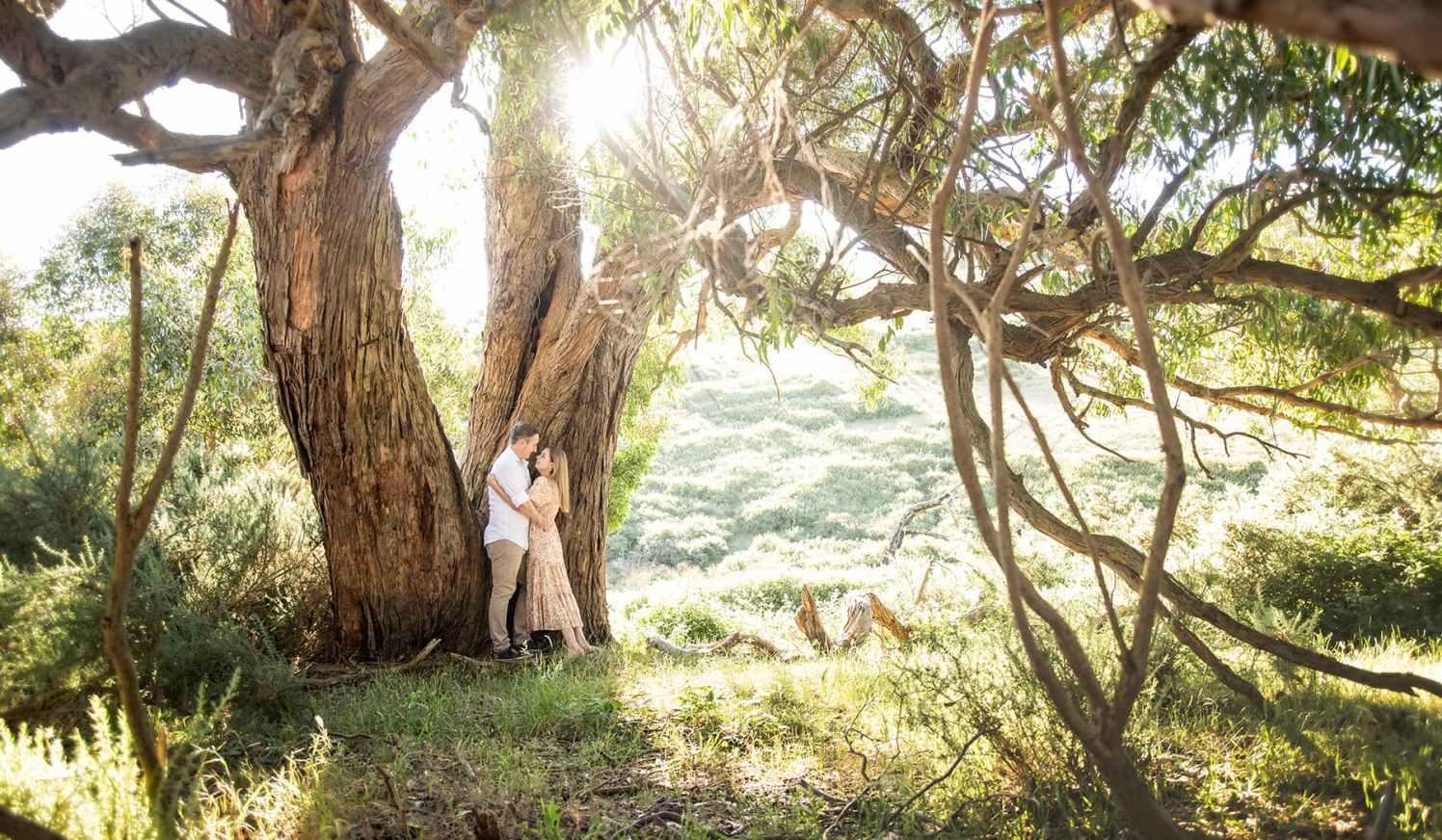 Sun shining through gum tree