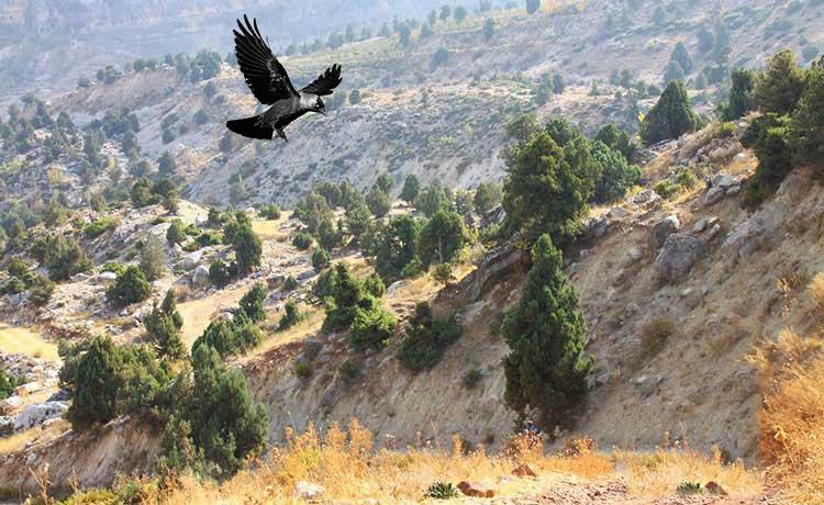 lebanon mountain