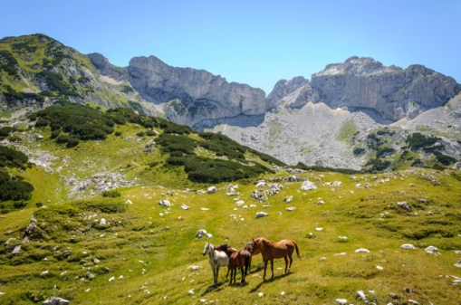 Wild horses in Donja Alisnica Valley