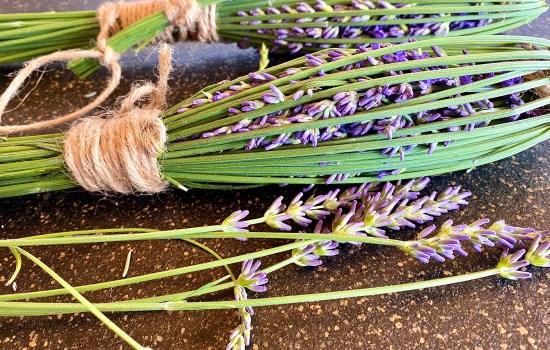 Lavendelsträuße binden