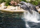 Delfinárium v Norimberku