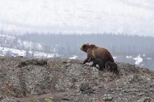 V údolí umírají i medvědi