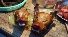 Pes jako jídlo