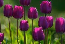 гороскоп цветов в июне