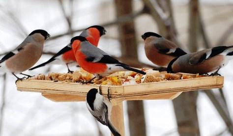 Кормушка для птиц своими руками, фото оригинальные идеи