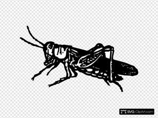 Bugs Svg Downloads