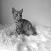 mobilfoto,sorthvit,utstilling,katt