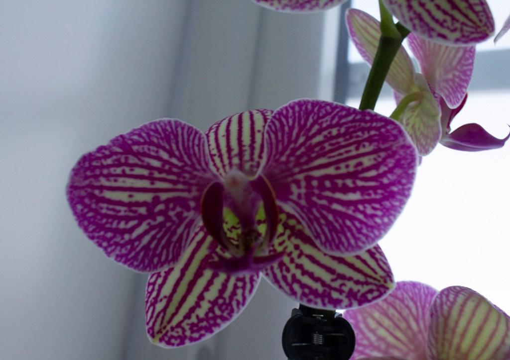 orkide,vindu,foto,mksørumsand
