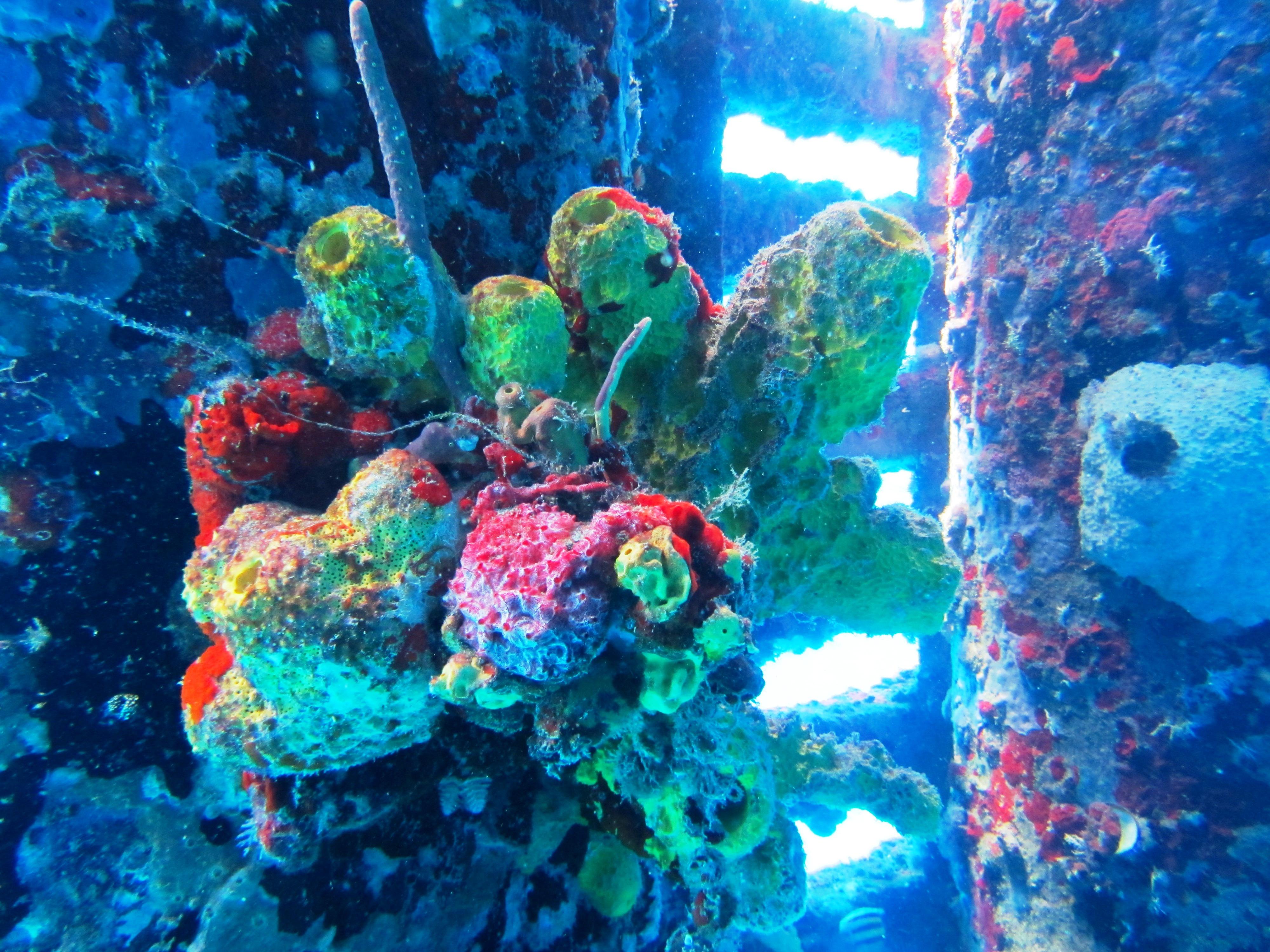 Sponges on the Fredricksted peir