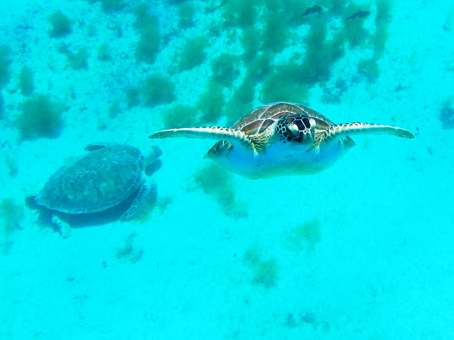 Wildlife - Turtle Swimming To Me