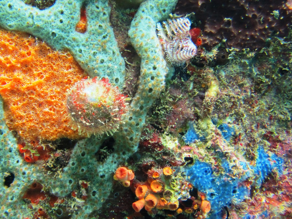 Different color and styles of sponges