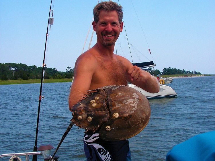 WIth a horseshoe crab