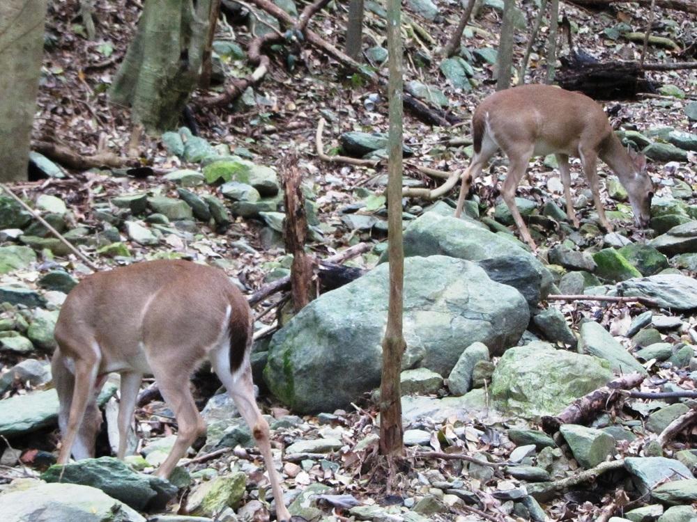 Deer-On-St-John