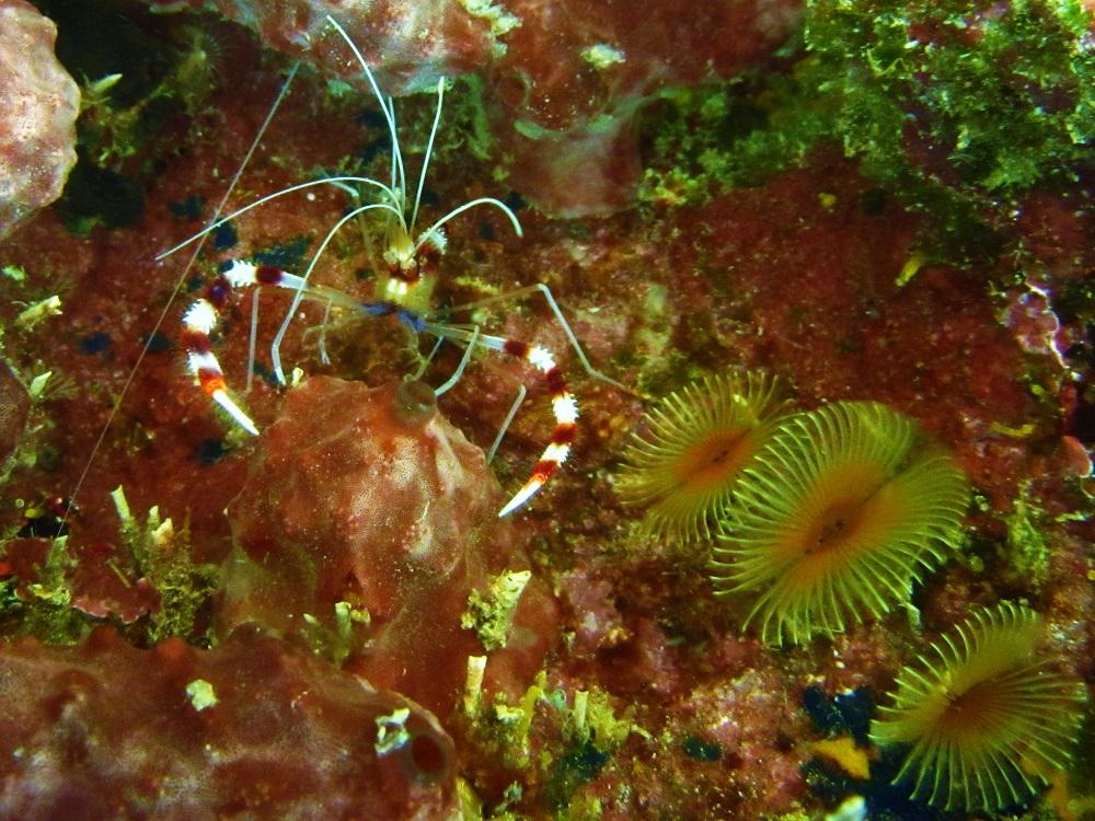 Shrimp Crawling To Me