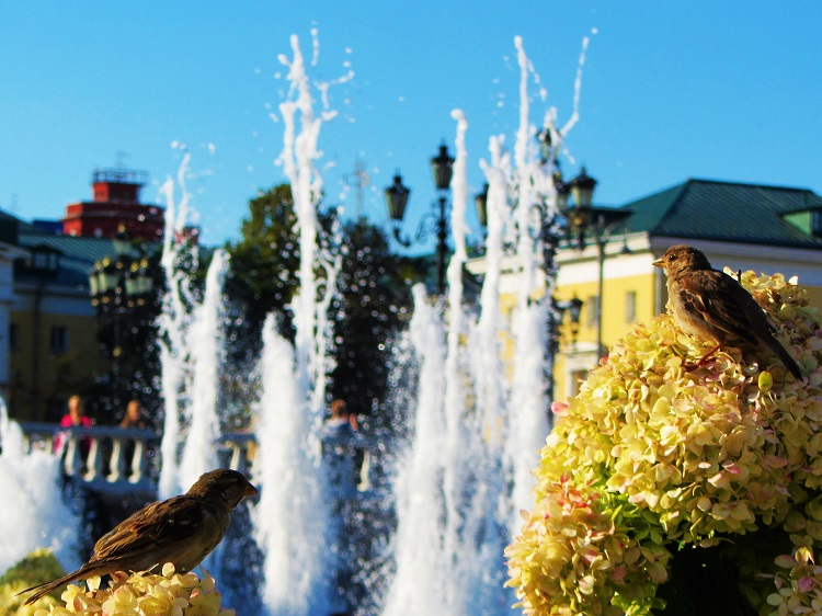 russia-moscow-potd-fountain-with-birds