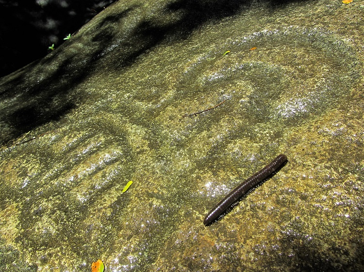 Petroglyphs With A Milliped