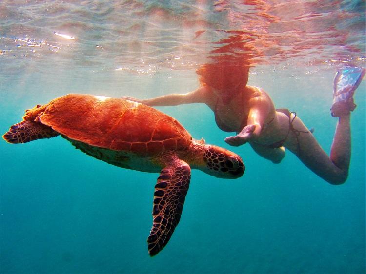 Statia - Melek & Turtle