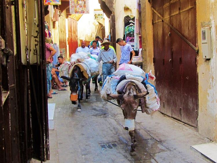 Donkeys walking in Fez