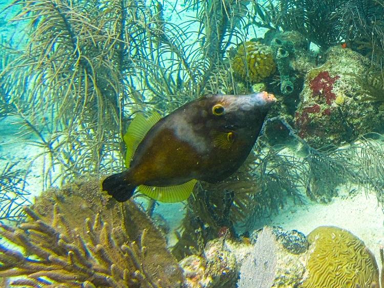 Underwater - File Fish