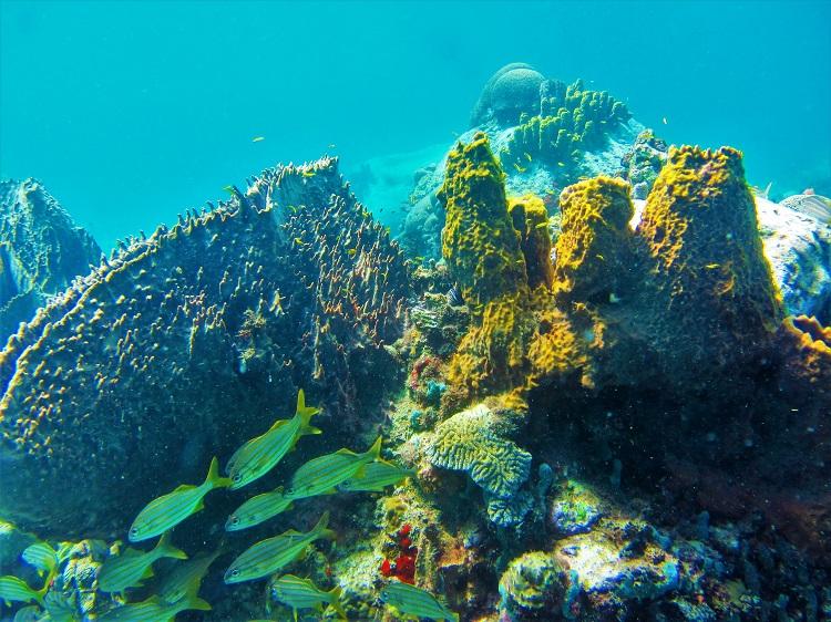 Anse Cochon reef