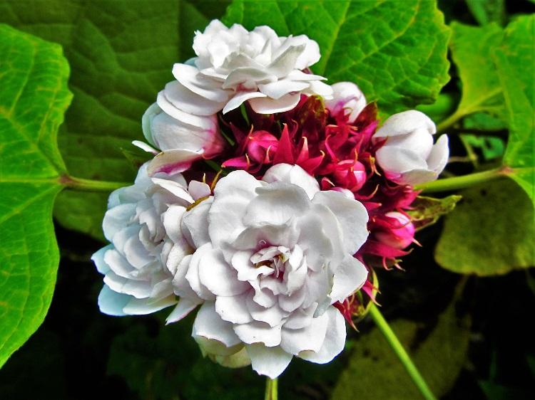 Flower in the St Lucia rainforest