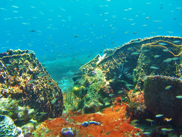 Soufriere snorkeling
