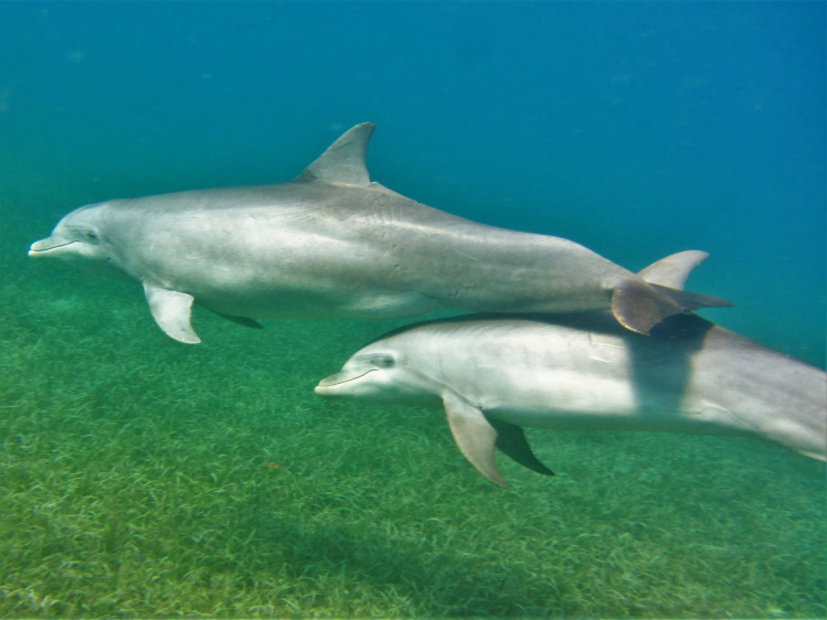 Dolphins swimming together