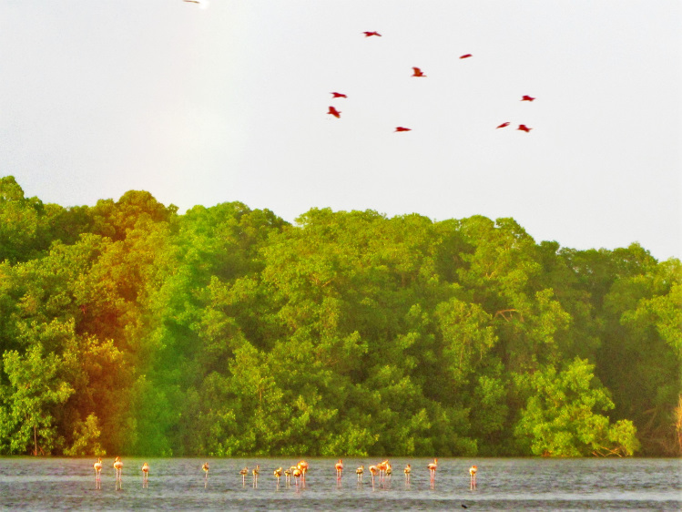 Caroni Swamp with a rainbow