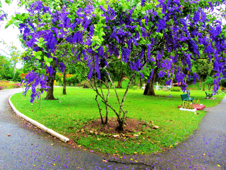 Purple flower tree
