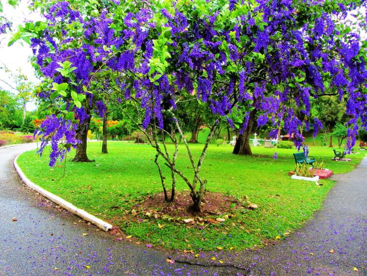Purple flower tree