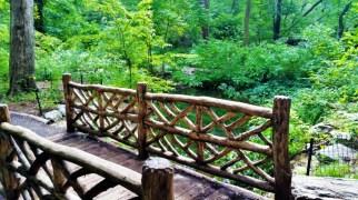 USA - New York - Central Park 3