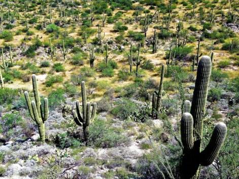 Saguaro National Park 3