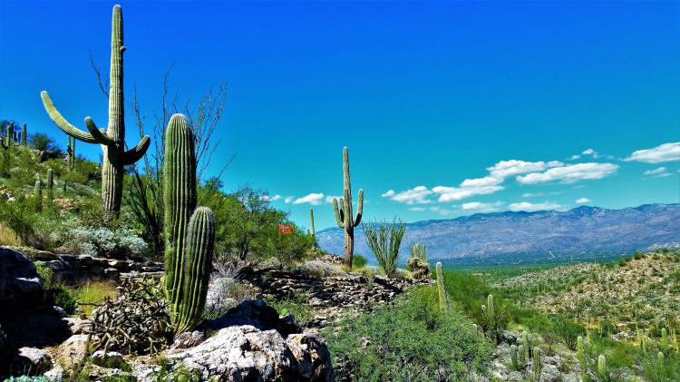 USA - AZ - Saguaro NP POTD 3