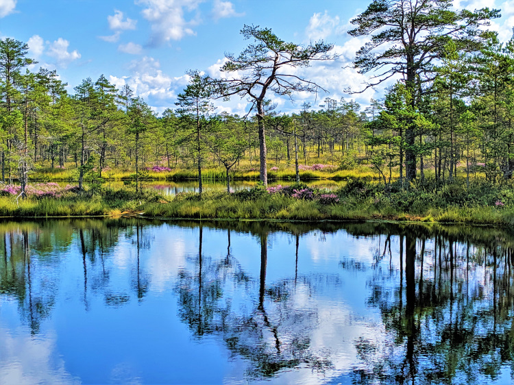 Lahemaa National Park POTD