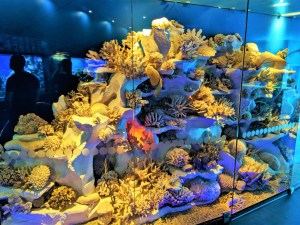 Museum of World Oceans 3