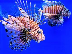 Museum of World Oceans 4