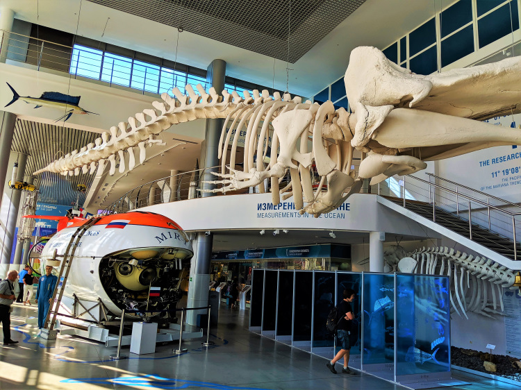 Museum of World Oceans 5