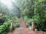Raining in El Yunque