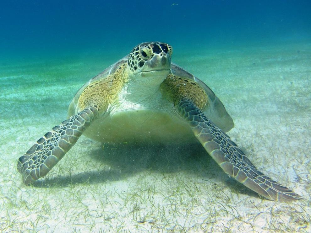 Turtle straight ahead