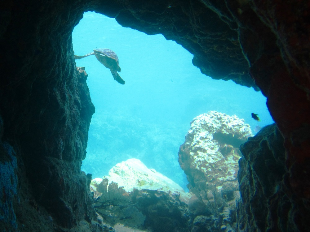 Turtle swimming out of a tunnel