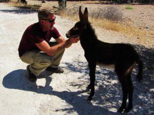 Israel - Nazareth Village - Donkey