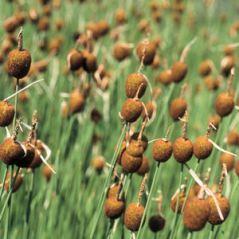 rastline-074