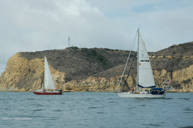 Two boats of the Ha-Ha fleet passing Point Loma on the way out of San Diego.